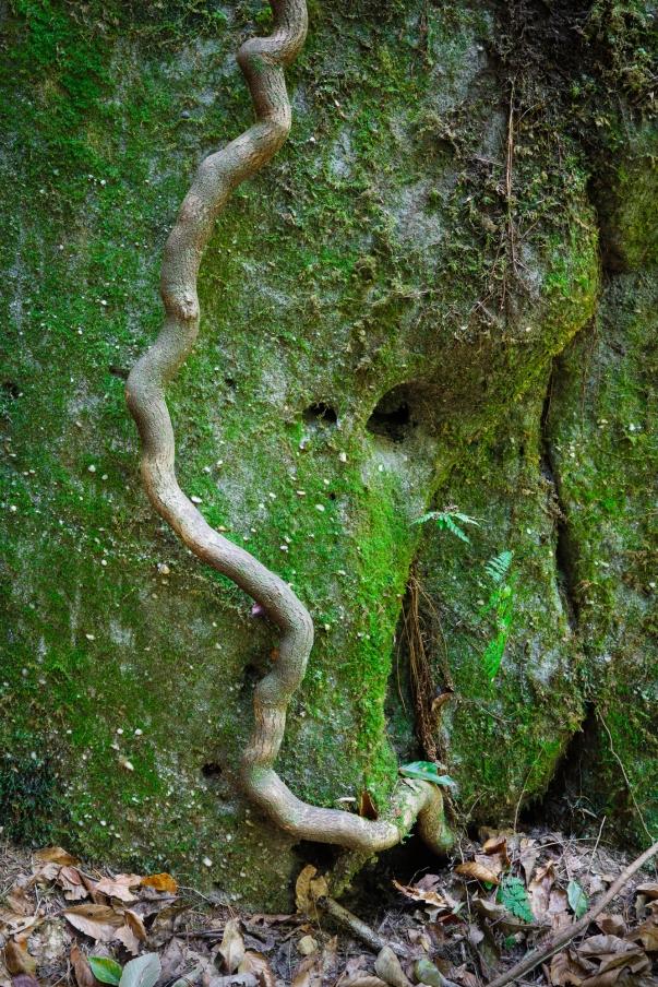 Moss and Vine