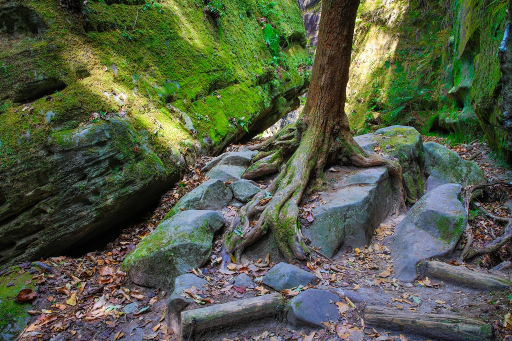 Rocks and Roots